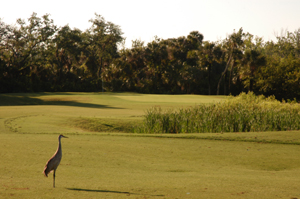 Baytree National Golf Hole 3 with Sandhill Crane